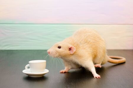 White rat or mouse sitting with a white cup of tea or coffee on a black and rainbow background. The concept of morning, breakfast, coffee break, new year with copyspace Banco de Imagens