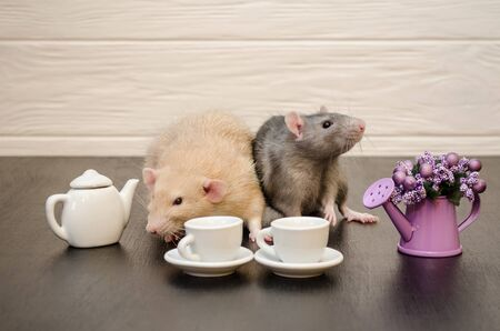 Pair of rats in love, white and gray, are sitting with cups of tea and a teapot, with a bouquet of purple flowers on a black and white wooden background, on a date Banco de Imagens