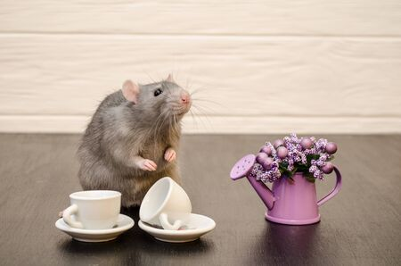 Gray rat sits with cups of tea, with a bouquet of purple flowers on a black and white wooden background