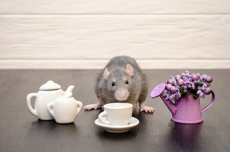 Gray rat sits with cup of tea and a teapot, with a bouquet of purple flowers on a black and white wooden background