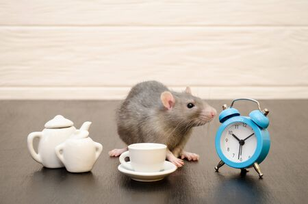 Gray rat sits with cup of tea, a teapot and blue alarm clock, with a bouquet of purple flowers on a black and white wooden background, he is having breakfast