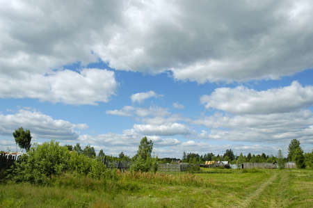 clearing the path: Summer landscape