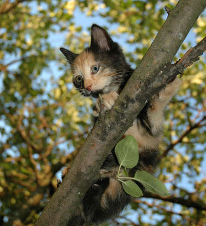 skewbald: Skewbald Kitten on the tree Stock Photo