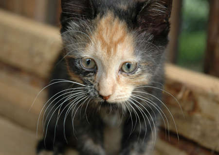 whiskers: Cat whiskers