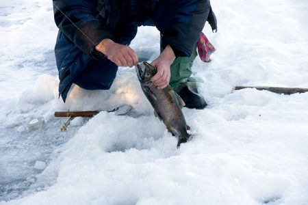 fisherman pulls out fish from-under ice Stock Photo - 2272556