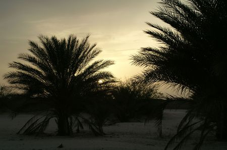 The Sundown in desert. Silhouettes tree on background sky. Stock Photo - 2366810