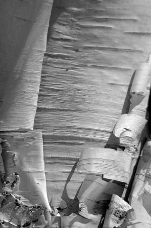 cortex: Cortex details of Birch Tree (Betula verrucosa). Stock Photo