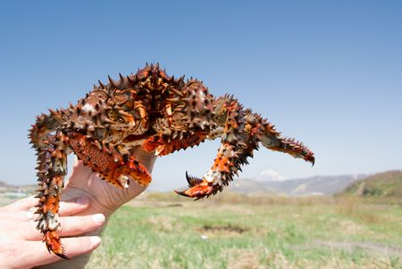nocturnal: crab in hand on background blue sky Stock Photo