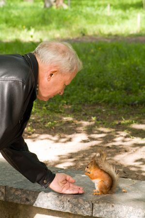 red squirrel eating from hand of adult men photo
