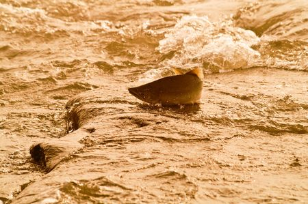 salmon goes on spawning in river of the kamchatka ( processing) photo