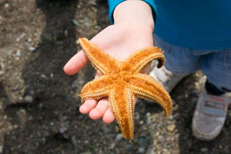 starfish rests upon palm of the child Stock Photo