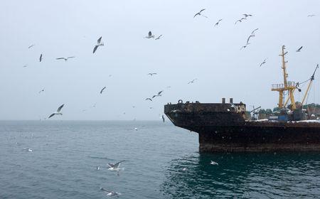 industrial ship beside coast Kamchatka during snowfall photo