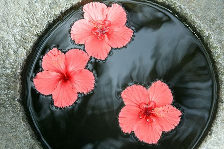 figuration spa, drop in water the beautiful red flower photo