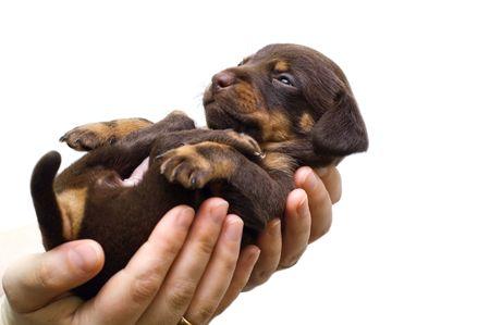 puppy sleeps on the girls hand