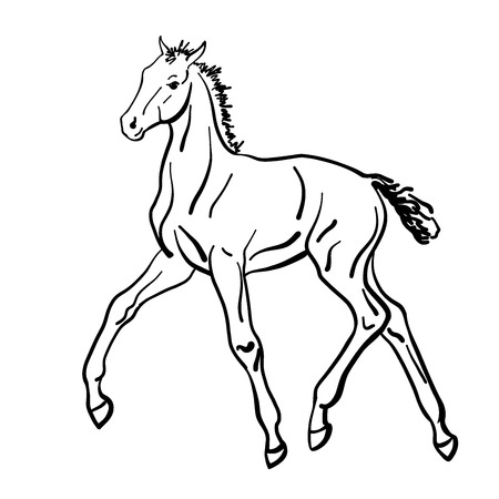 A vector sketch of a foal.