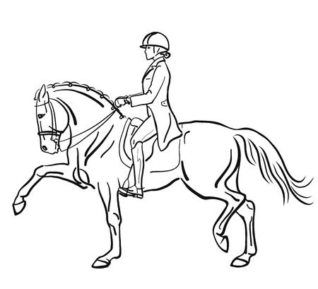 Reitsport, Dressur. Eine Reiterin trabt hoch auf einem Pferd