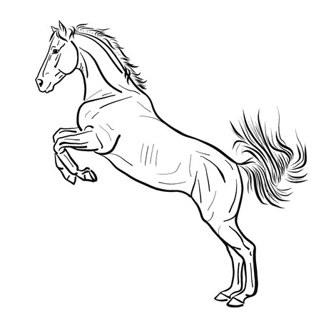 Sketch of the horse standing on its hind legs. Stock Photo
