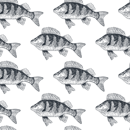 Fish crucian carp, isolated black and white, side view.