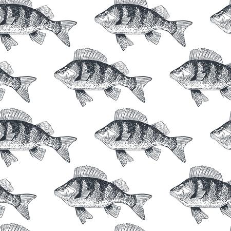 crucian carp: Fish crucian carp, isolated black and white, side view.