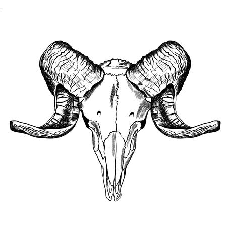 Illustration with goat skull. Hand drawn. Vector Illustration