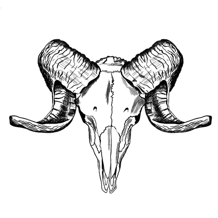 Illustration with goat skull. Hand drawn. Vector Illusztráció