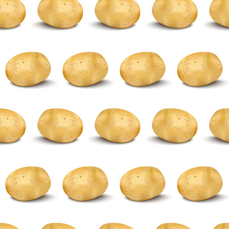 Young potato isolated on white background. Harvest new flat lay and top view. Illustration