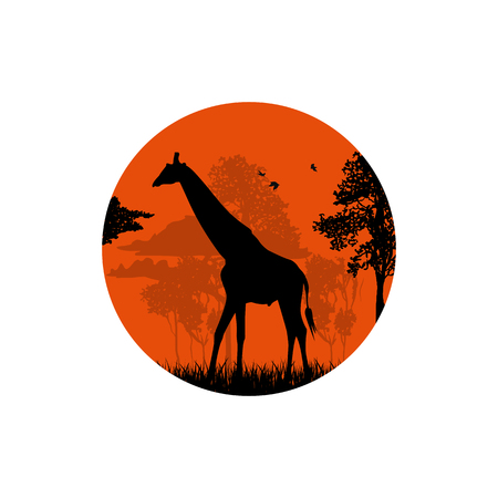 Silhouette of a giraffe in the forest