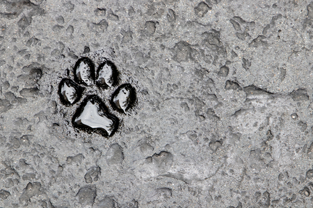 Dog footprint on the ground stone background pattern texture abstract.