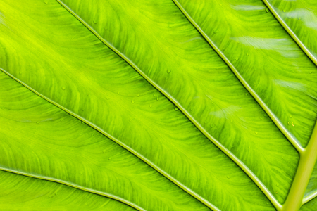 Absract texture fresh bright green leaf background in nature.