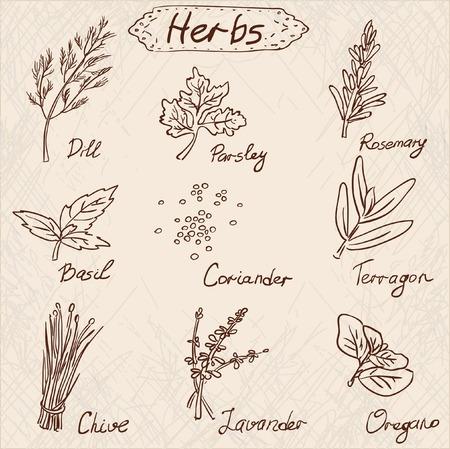 Herbs set, vector hand drawn illustration