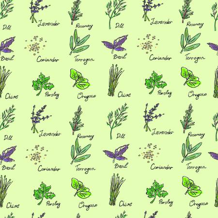 Seamless Pattern Herbs set, vector hand drawn illustration Vector