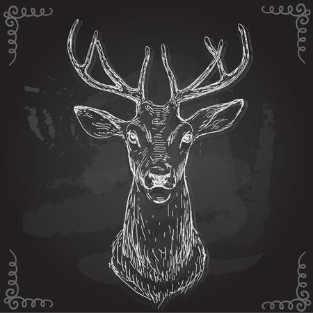 cabeza: vector - mano dibujar, aislado en el fondo - Deer. Vectores