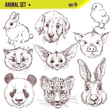 pencil drawn: Set of hand drawn animals, vector illustration
