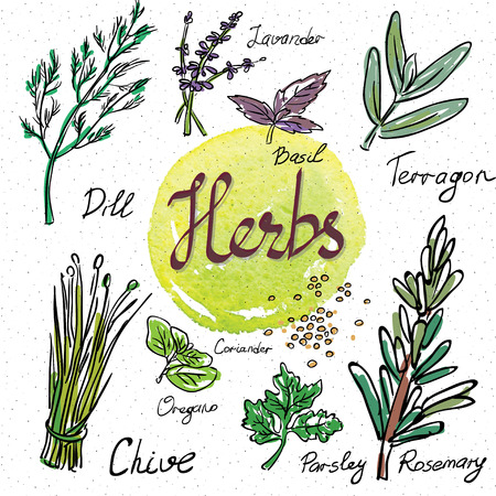 chive: Kitchen herbs and spices. Hand drawn sketch icons