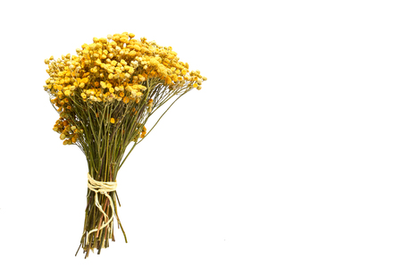 three bouquets of dried flowers on a white background isolated Stock Photo