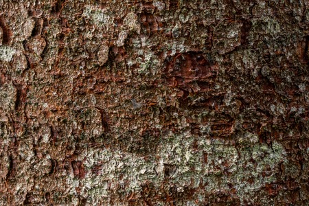 macro texture of pine bark texture