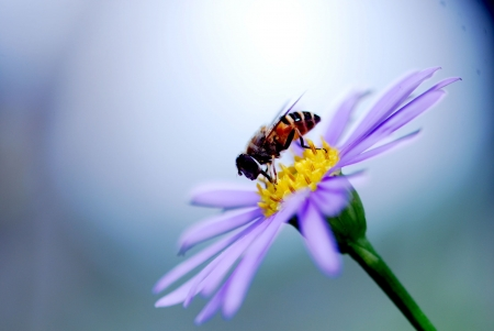 bee garden: abeja en flor  Foto de archivo