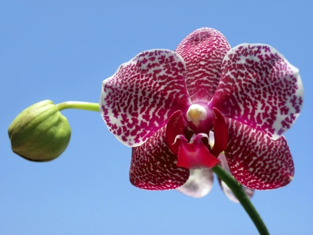 purple and white orchid against the blue sky Stock Photo - 11981368