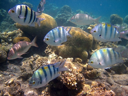 Fish living in the coral of the Red Sea Stock Photo - 12023251