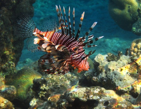photograph was taken in the Red Sea in Israel Stock Photo
