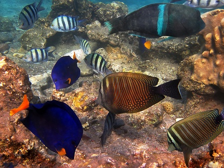 photograph was taken in the Red Sea in Israel photo
