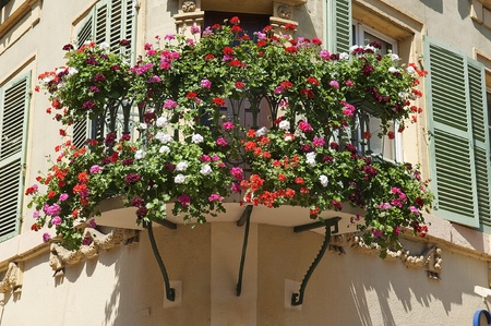 Flowers in the city of Colmar France photo