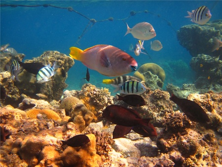 different colored fish among the corral Stock Photo - 12479180