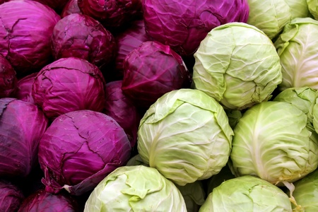 Agricultural background, a white and purple cabbage