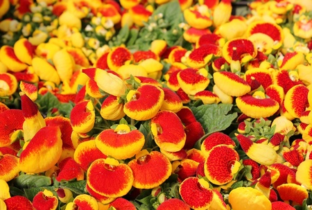 surprisingly bright and colorful flowers Stock Photo - 12534370