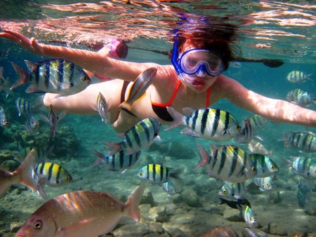 girl swimming under water among tropical fish photo