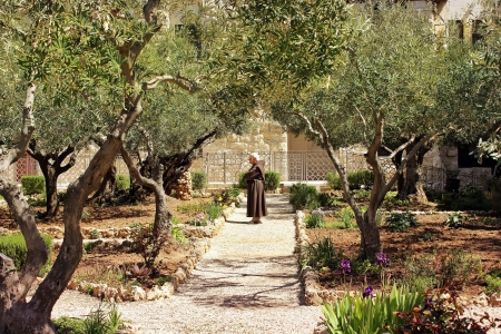 yielding: keeper of the Garden of Gethsemane, Jerusalem  place of prayer of Jesus on the night of his arrest Editorial