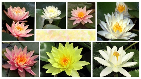 a collage of flowers of water lilie, in the middle there is a place for your text Stock Photo - 12807164
