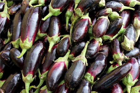 Agricultural background, a dark blue eggplant Stock Photo - 12807160