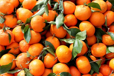 Agricultural background, a freshly picked tangerines